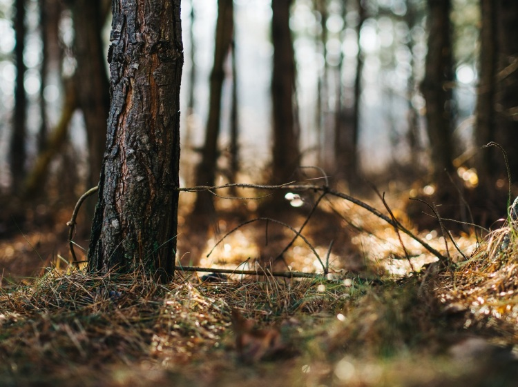 nature-sun-forest-grass-8745.jpg